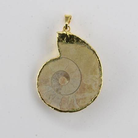 Pendant ammonite gold electro-plated