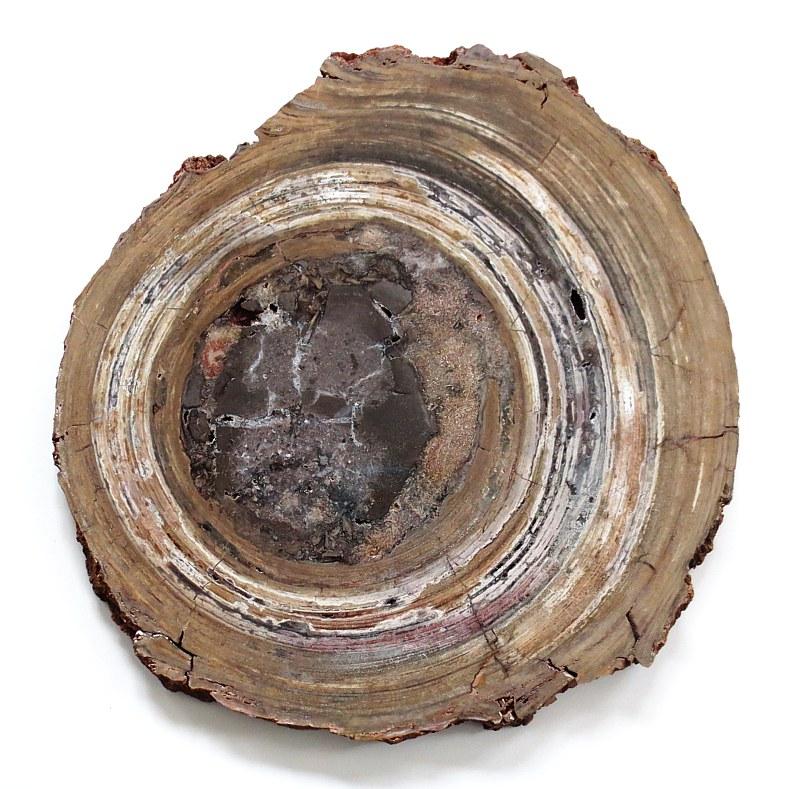 Conophytum basalticum (Onkolite)