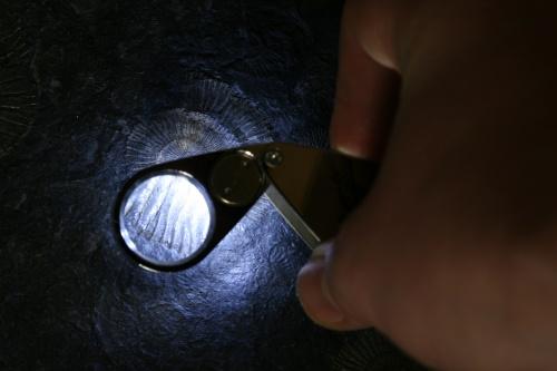 Einschlaglupe 10-fach mit UV LED-Beleuchtung
