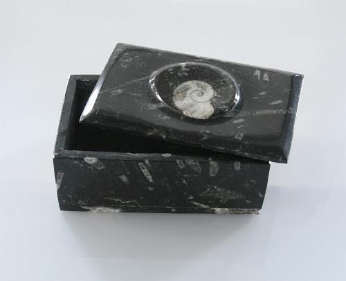 Fossil jewelry box
