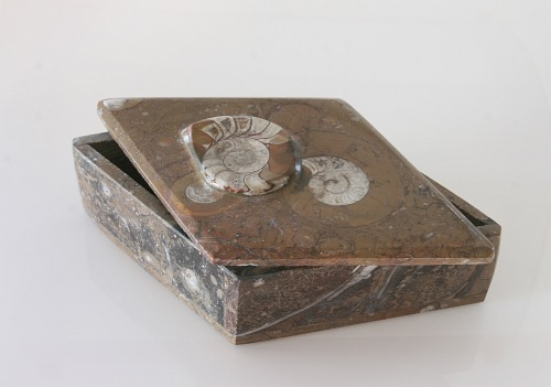 Fossil jewelry box