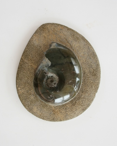 Goniatite plate