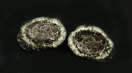 Hermanov ball, both parts, with Anthophyllite