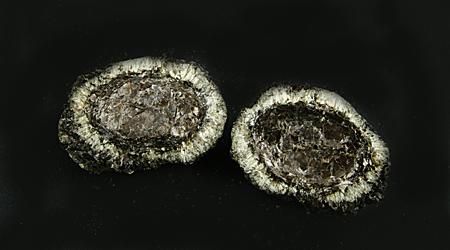 Hermanover Kugel, zweiteilig, mit Anthophyllit