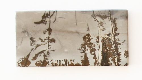 Landscape Dendrites