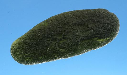Moldavite giant