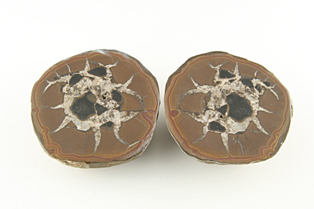 Septarienpaar