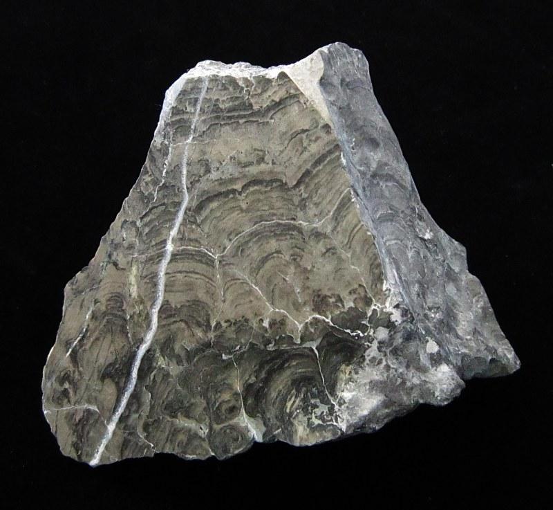 Stromatolith